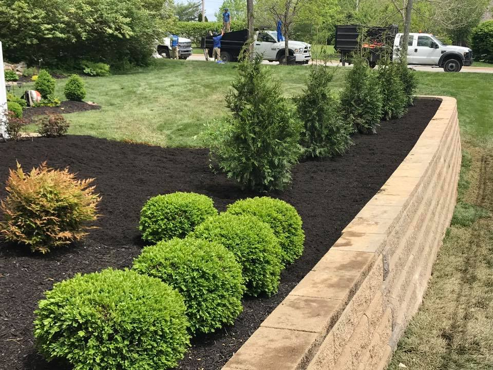 Tree Installation Louisville Landscaping